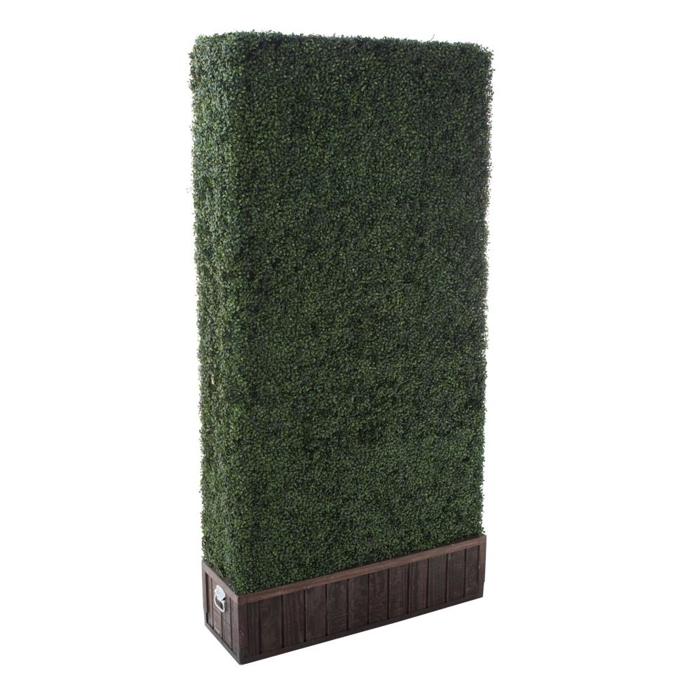 boxwood-hedge-4x8
