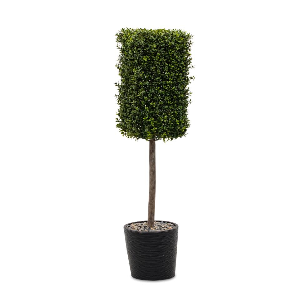boxwood-topiary-pot