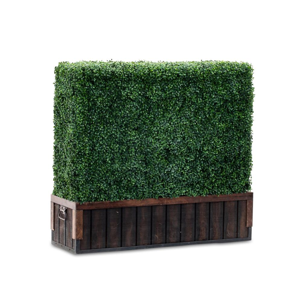 short-boxwood-hedge-4-l-x-42-h